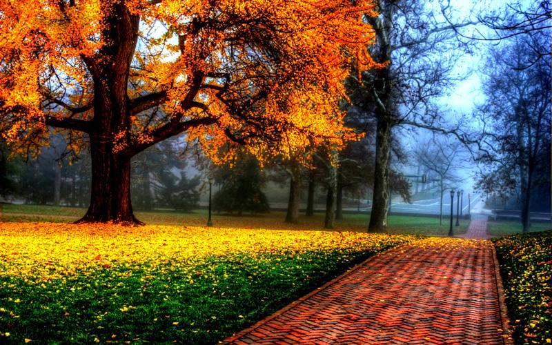 vackert-höstträd